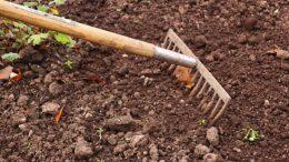 Türkiye'de Bahçıvanlık Nasıl Yapılır?